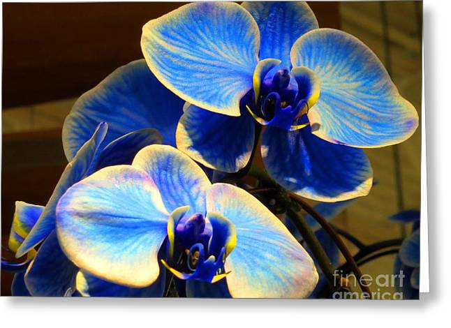 Blue Diamond Orchids Greeting Card by Patricia Januszkiewicz