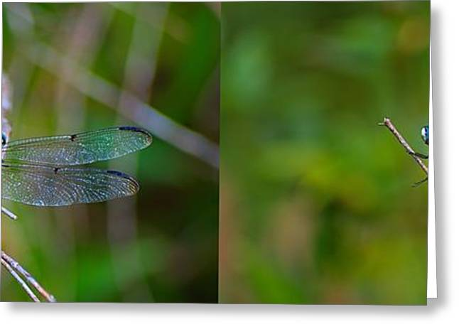 Blue Dragon Fly Wide Print Greeting Card