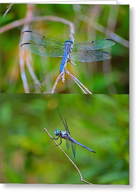 Blue Dragon Fly Greeting Card