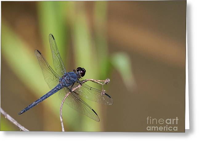 Blue Dragonfly Greeting Card by Dale Nelson