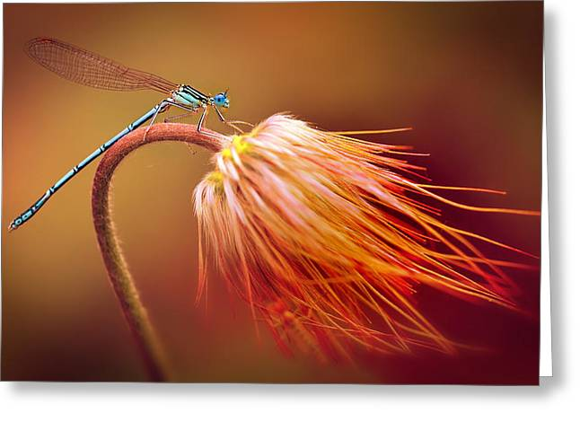 Blue Dragonfly On A Dry Flower Greeting Card by Jaroslaw Blaminsky