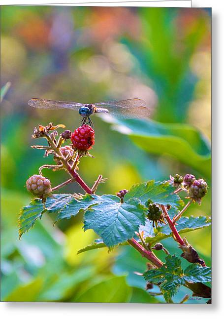 Blue Dragonfly On Berry Greeting Card