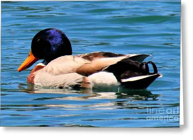 Blue Duck Greeting Card by Tap On Photo