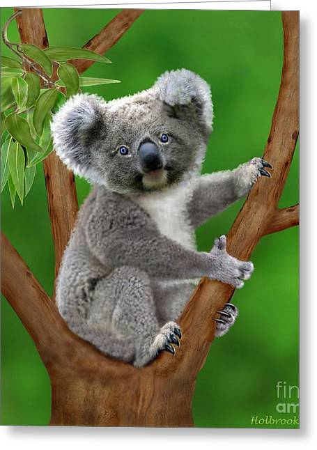 Blue-eyed Baby Koala Greeting Card