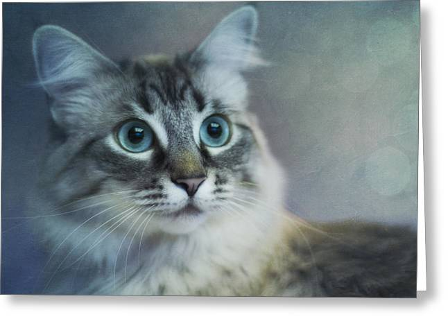 Blue Eyed Queen Greeting Card