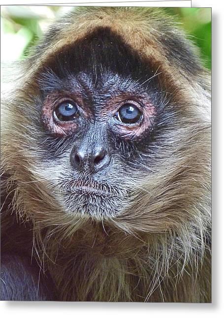 Blue Eyed Spider Monkey Greeting Card by Margaret Saheed