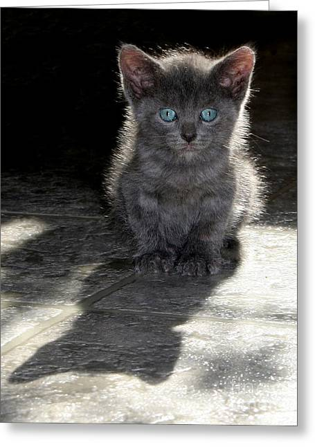 Blue Eyes Greeting Card