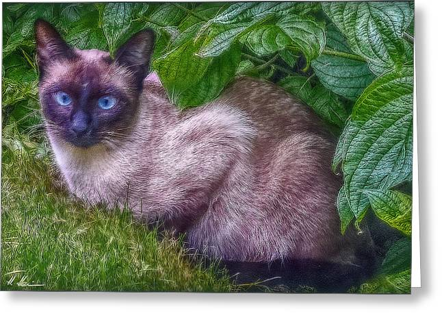 Greeting Card featuring the photograph Blue Eyes - Signed by Hanny Heim