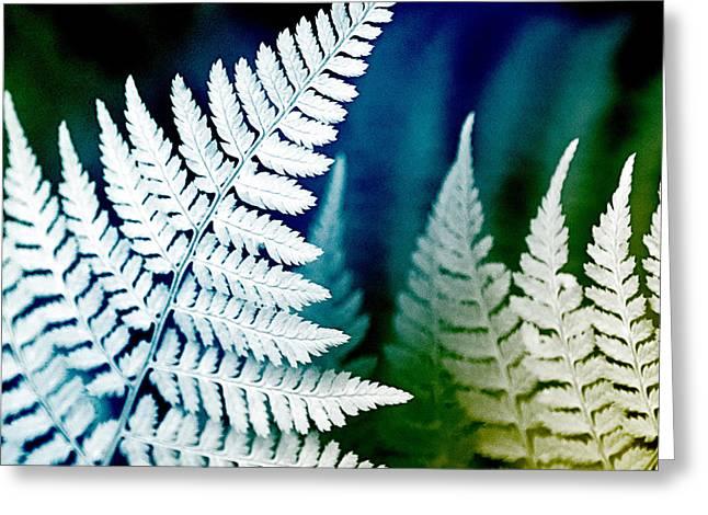 Blue Fern Leaf Art Greeting Card by Christina Rollo