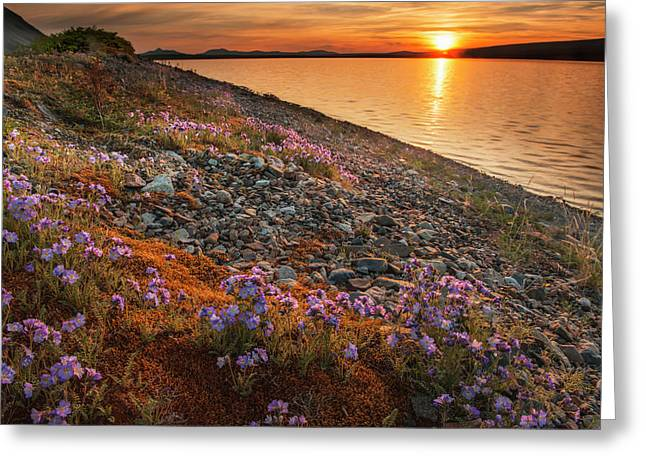 Blue Flax And Sunset At Lower Twin Greeting Card by Carl Johnson