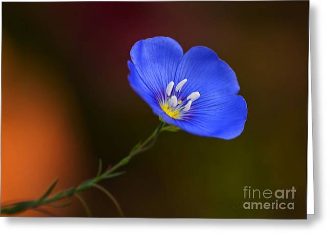 Blue Flax Blossom Greeting Card