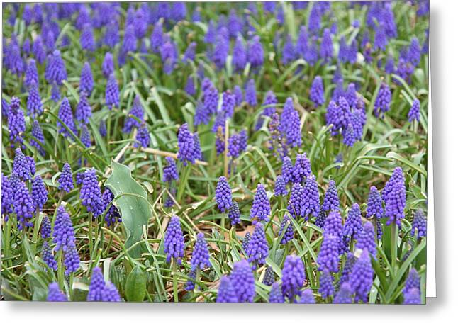 Blue Flower - 01131 Greeting Card