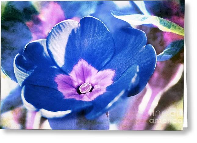 Blue Flower Greeting Card by Angela Bruno