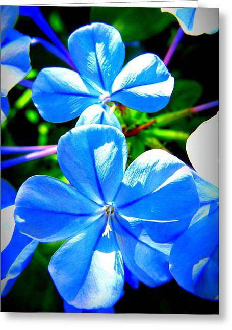 Greeting Card featuring the photograph Blue Flower by David Mckinney