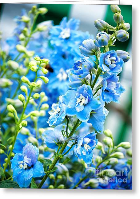 Blue Flowers Greeting Card by Antony McAulay