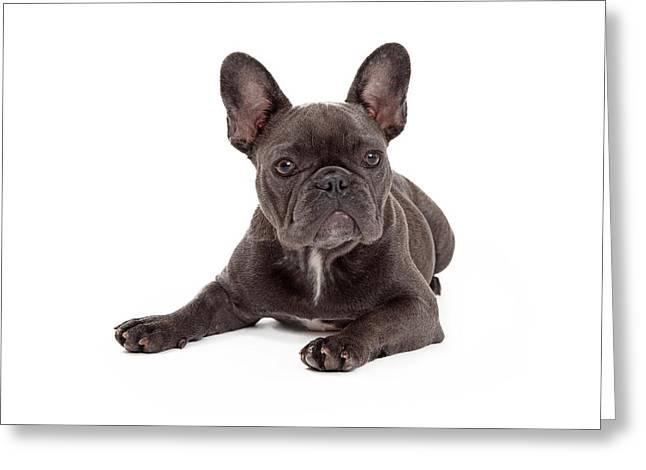 Blue French Bulldog Laying Greeting Card by Susan Schmitz