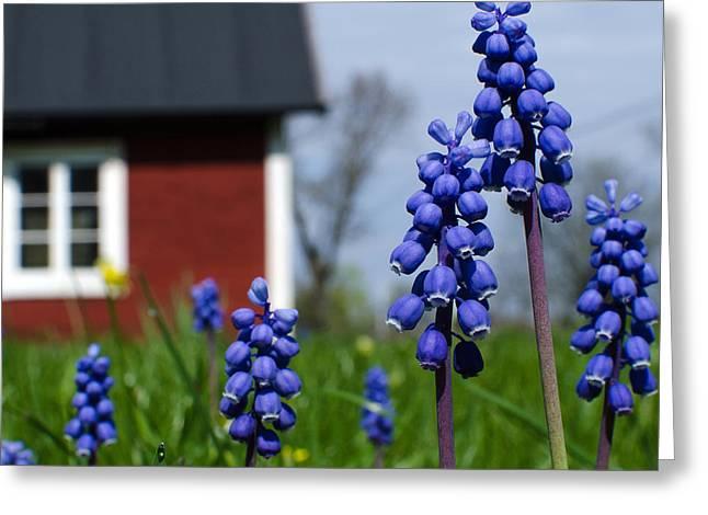 Greeting Card featuring the photograph Blue Garden Flowers by Kennerth and Birgitta Kullman