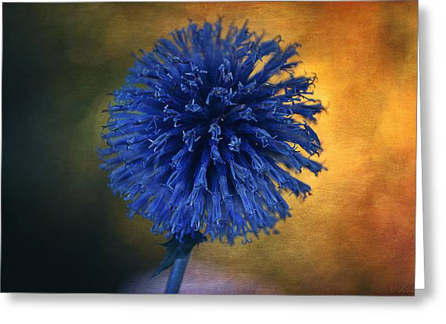 Blue Globe Thistle  Greeting Card by Maria Angelica Maira