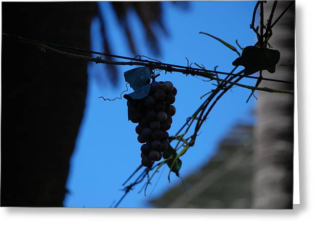 Blue Grapes Greeting Card by Dany Lison