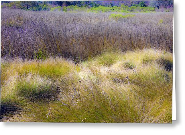 Greeting Card featuring the photograph Blue Grass by Paula Porterfield-Izzo