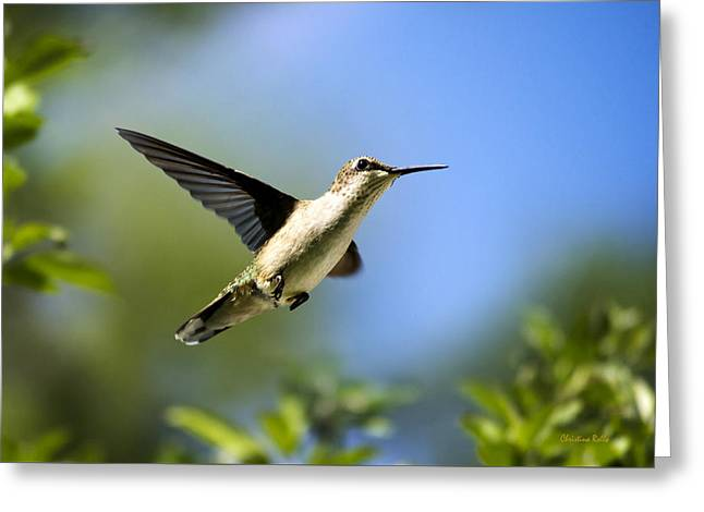Blue Green Hummingbird Art Greeting Card by Christina Rollo