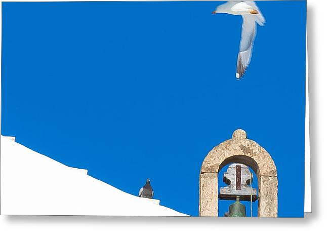 Blue Gull Greeting Card