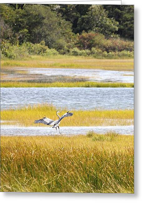 Blue Heron 2 Greeting Card by Jim Gillen