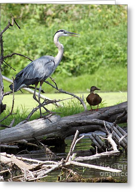 Blue Heron And Friend Greeting Card
