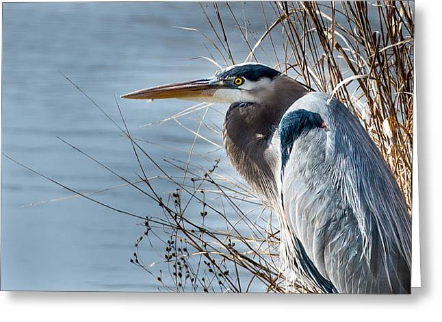 Blue Heron At Pond Greeting Card