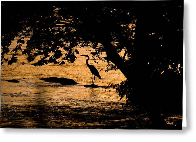 Blue Heron At Sunset Greeting Card