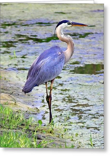Blue Heron Beauty Greeting Card