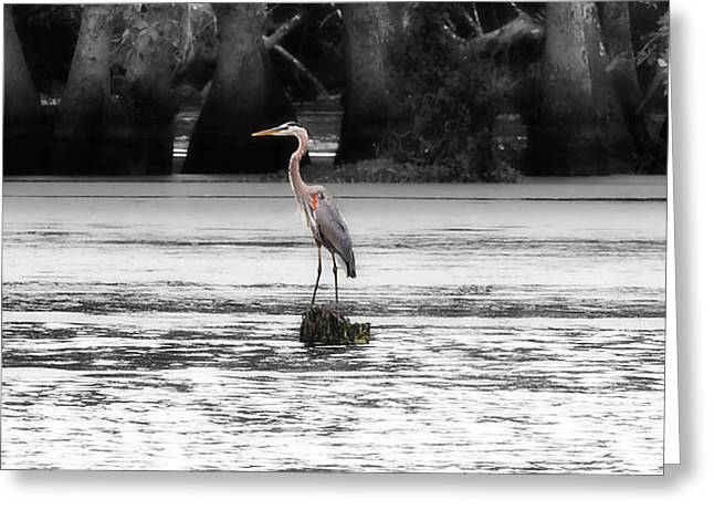 Blue Heron Greeting Card by Cecil Fuselier