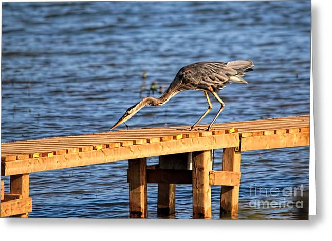 Blue Heron Dragonfly Lunch Greeting Card