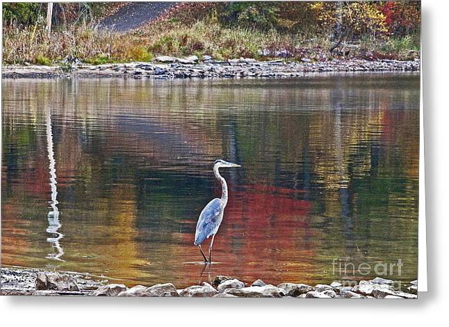 Blue Heron In Autumn Greeting Card by Joan McArthur