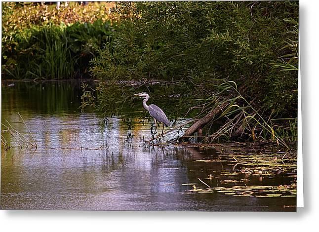 Blue Heron Greeting Card by Leif Sohlman