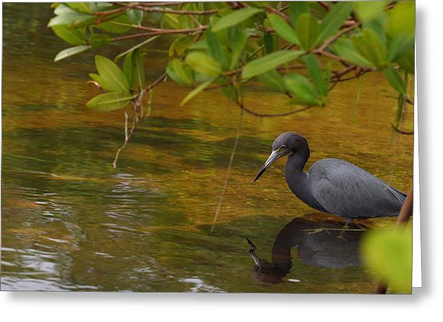 Blue Heron Greeting Card by Mark Russell