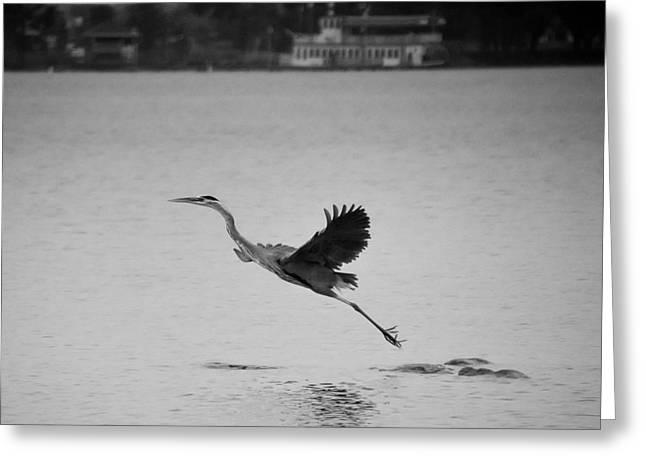 Blue Heron On Canandaigua Lake 2013 Greeting Card