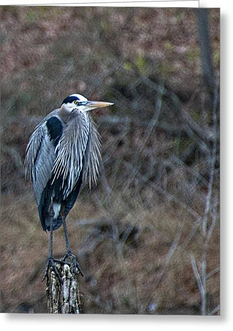 Blue Heron On Stump Greeting Card by Bill Perry