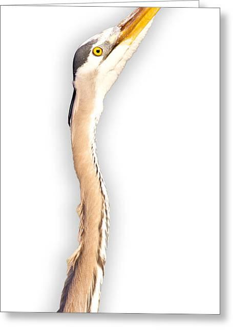 Blue Heron On White Greeting Card