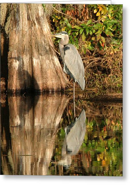 Blue Heron Reflection Greeting Card by Jeff Wright