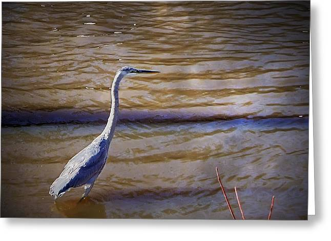 Blue Heron - Shallow Water Greeting Card by Brian Wallace