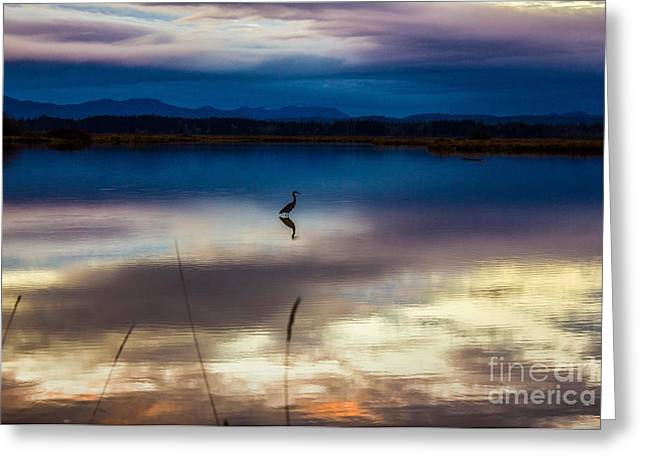 Blue Heron Sun Set Greeting Card