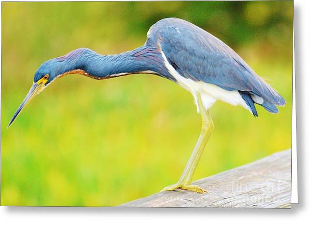 Greeting Card featuring the photograph Blue Heron by William Wyckoff
