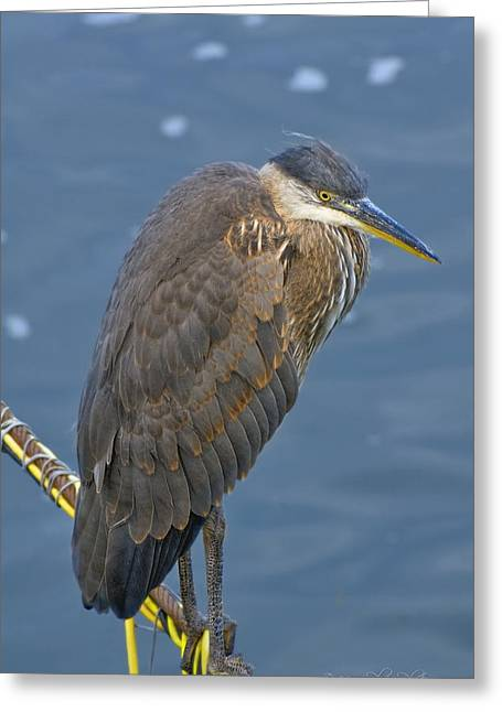 Blue Herron Greeting Card
