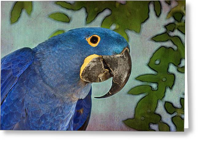 Blue Hyacinth Tapestry - Macaw Greeting Card by Nikolyn McDonald