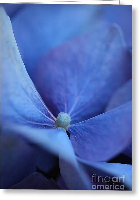 Blue Hydrangea 2 Greeting Card