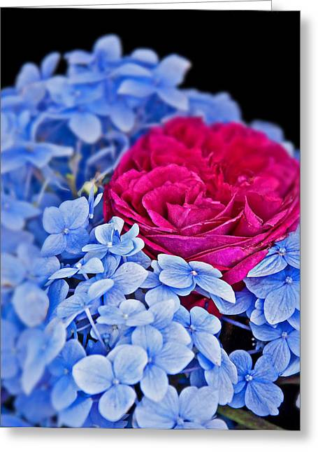 Blue hydrangea flowers and bright pink roses photograph by valerie garner - Valerie garnering ...
