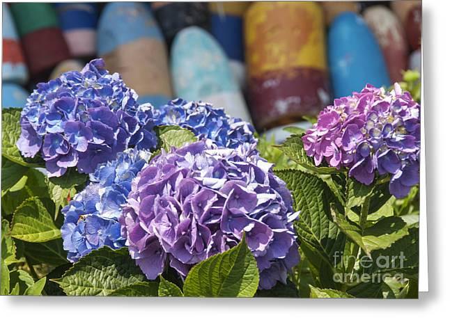 Blue Hydrangea Greeting Card by Juli Scalzi