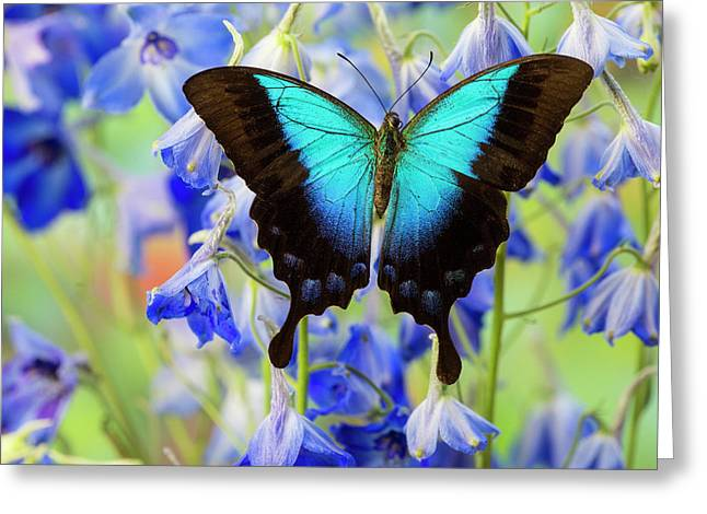 Blue Iridescence Swallowtail Butterfly Greeting Card
