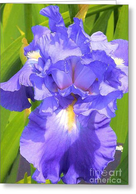 blue Iris Greeting Card by Claudette Bujold-Poirier